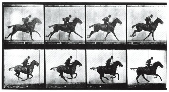 马跑步运动规律